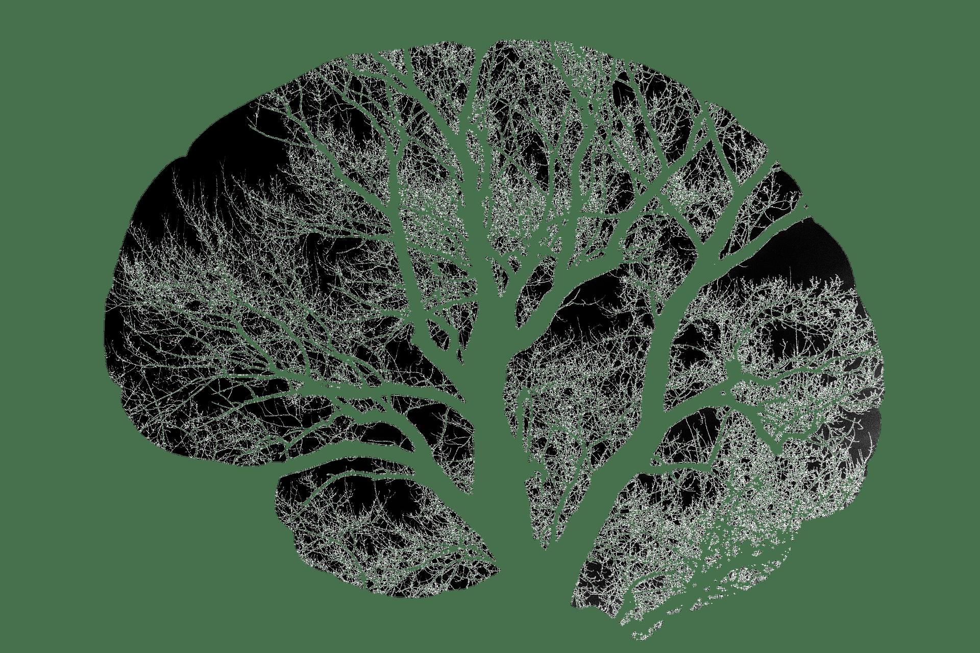 Ihre Fachärztin für Neurologie in Innsbruck, Dr. Birgit Biedermann. Wichtige neurologische Erkrankungen: Kopfschmerzen, Migräne, Schlaganfall, Epilepsien, multiple Sklerose, Demenzen, Morbus Parkinson und verwandte Erkrankungen, Kopfschmerzen, Dystonien, Myopathien, Neuropathien, Schwindel und Psychosomatische Erkrankungen.